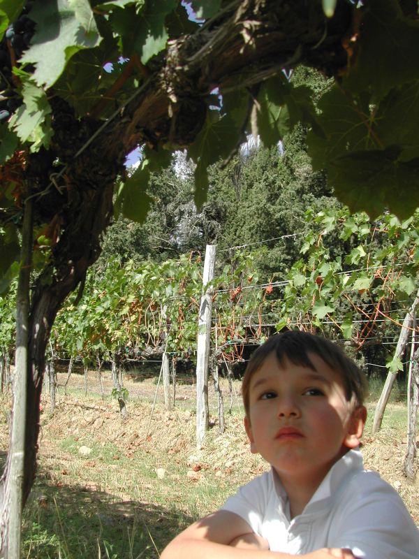vigne-029