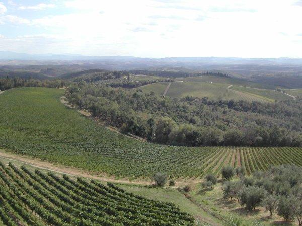 vigne-0351